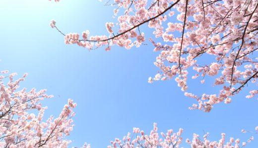 箕面、勝尾寺の桜2020!見頃の時期やライトアップや屋台、混雑情報やアクセス、駐車場について