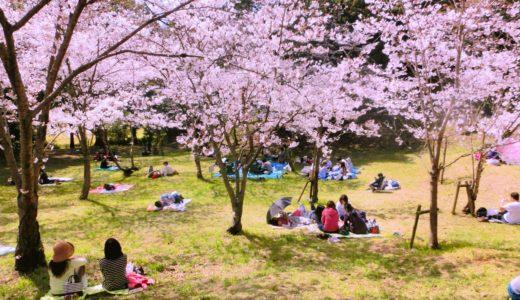 榴岡公園桜まつり2020!夜桜や屋台、混雑情報やアクセス、駐車場についても!